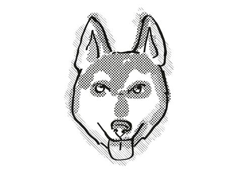 Retro cartoon style drawing of head of an Alaskan Klee Kai  , a domestic dog or canine breed on isolated white background done in black and white. Banco de Imagens