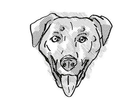 Retro cartoon style drawing of head of a Chinook , a domestic dog or canine breed on isolated white background done in black and white.