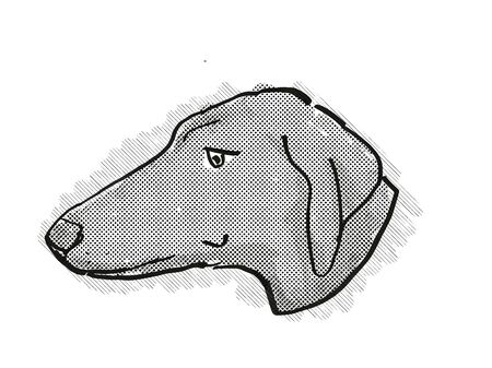 Retro cartoon style drawing of head of a Azawakh dog , a domestic dog or canine breed on isolated white background done in black and white.