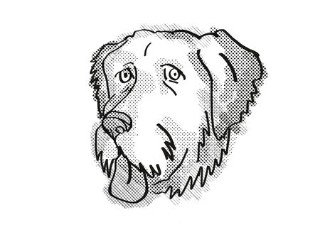 Retro cartoon style drawing of head of an  Aussiedoodle , a domestic dog or canine breed on isolated white background done in black and white.