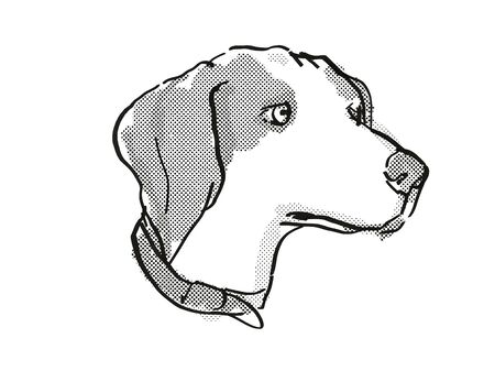 Retro cartoon style drawing of head of a Beagle  , a domestic dog or canine breed on isolated white background done in black and white.