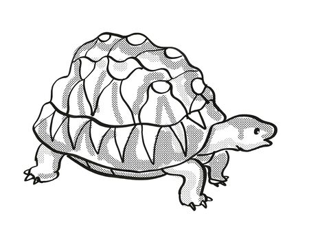 Retro cartoon mono line style drawing of a Radiated Tortoise, an endangered wildlife species on isolated white background done in black and white full body.