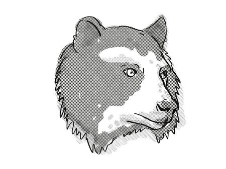 Retro cartoon style drawing of head of a Spectacled Bear also known as the Andean bear, an endangered wildlife species on isolated white background done in black and white.