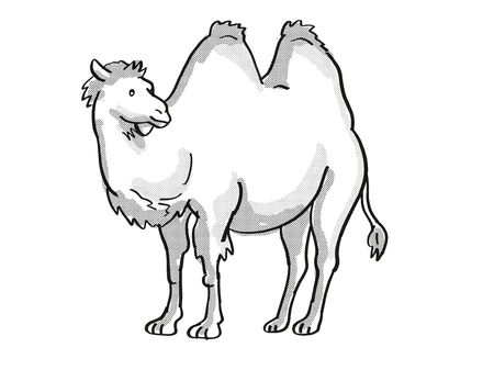 Retro cartoon mono line style drawing of a Bactrian Camel or Camelus Bactrianus, type of camel with two humps, an endangered wildlife species on isolated background done in black and white full body.
