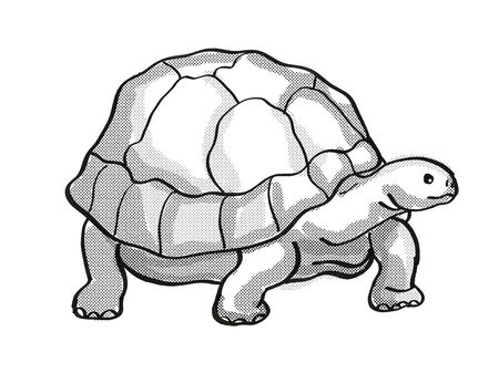Retro cartoon mono line style drawing of a Galapagos Tortoise or Geochelone Nigra, an endangered wildlife species on isolated white background done in black and white full body. Stok Fotoğraf
