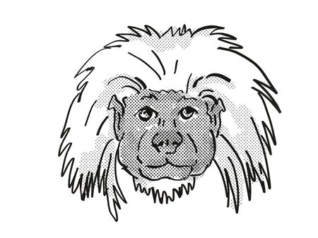 Retro cartoon style drawing of head of a Cottontop Tamarin , an endangered wildlife species on isolated white background done in black and white. Фото со стока