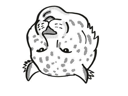 Retro cartoon mono line style drawing of head of an Amur Leopard, an endangered wildlife species on isolated white background done in black and white.