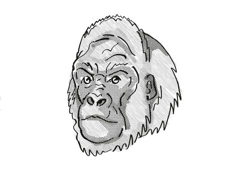 Retro cartoon style drawing of head of a Western Lowland Gorilla, an endangered wildlife species on isolated white background done in black and white.