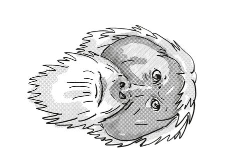 Retro cartoon style drawing of head of an Tapanuli Orang-utan or Pongo Tapanuliensis , an endangered wildlife species on isolated white background done in black and white. Фото со стока