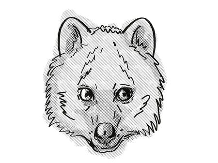 Retro cartoon style drawing of head of a Quokka, a small marsupial found in  south-west of Australia and an endangered wildlife species on isolated white background done in black and white.