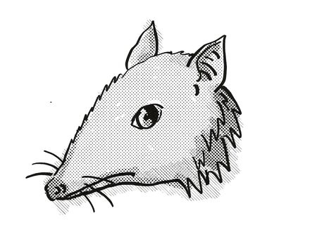 Retro cartoon style drawing of head of a Long-Nosed Bandicoot , an endangered wildlife species on isolated white background done in black and white. 版權商用圖片