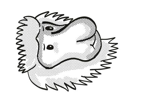 Retro cartoon mono line style drawing of head of a Proboscis Monkey, a medium-sized arboreal primate and endangered wildlife species on isolated white background done in black and white.