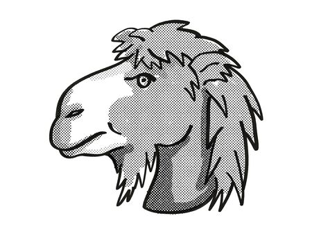 Retro cartoon mono line style drawing of head of a Bactrian Camel or Camelus Bactrianus, an endangered wildlife species on isolated white background done in black and white.