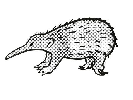 Retro cartoon mono line style drawing of a Western Long-beaked Echidna, an endangered wildlife species on isolated white background done in black and white full body.
