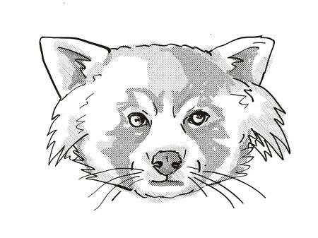 Retro cartoon style drawing of head of a Red Panda, a cat-sized species of carnivorous mammal and an endangered wildlife species on isolated white background done in black and white. Stock fotó