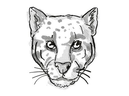 Retro cartoon style drawing of head of a Clouded Leopard or Neofelis nebulosa , an endangered wildlife species on isolated white background done in black and white.