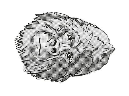 Retro cartoon style drawing head of a Silver Back or Mountain Gorilla, a monkey species viewed from front on isolated white background done in black and white 版權商用圖片