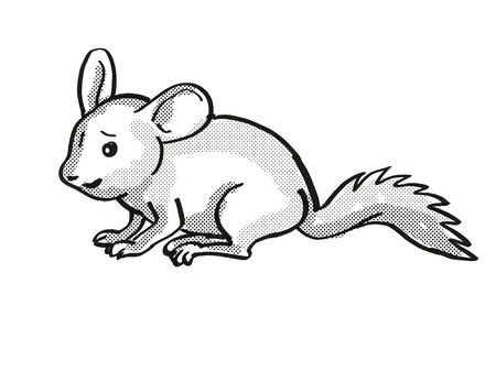 Retro cartoon mono line style drawing of a Chinchilla or Chinchilla Lanigera, a medium sized rodent in South America and an endangered wildlife species isolated background black and white full body.