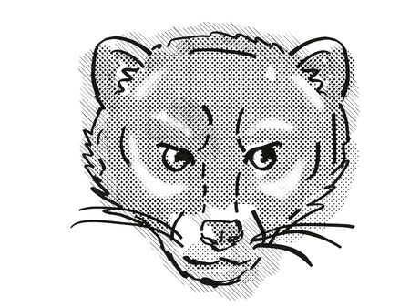 Retro cartoon style drawing of head of a Malayan Civet or Viverra Tangalunga , an endangered wildlife species on isolated white background done in black and white. Фото со стока