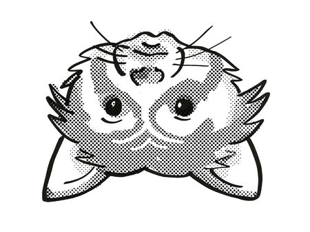 Retro cartoon mono line style drawing of head of a Red Panda , an endangered wildlife species on isolated white background done in black and white.