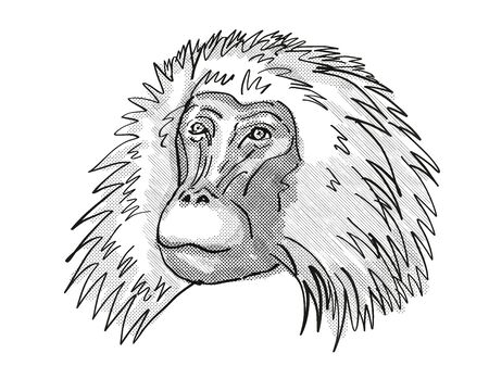 Retro cartoon style drawing head of a shaggy male Gelada, a monkey species viewed from front on isolated white background done in black and white