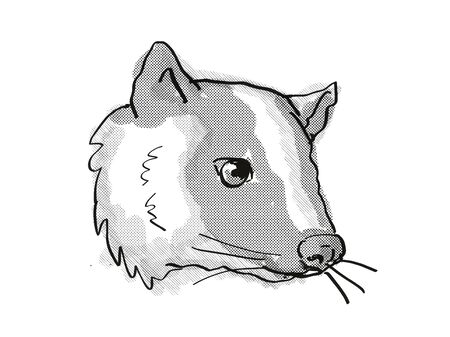 Retro cartoon style drawing of head of a Masked Palm Civet or Paguma Larvata, an endangered wildlife species on isolated white background done in black and white. Фото со стока