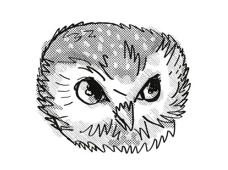 Retro cartoon style drawing head of a Northern Saw-Whet Owl viewed from front on isolated white background done in black and white