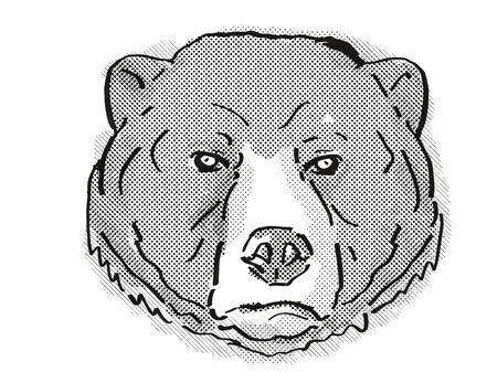 Retro cartoon style drawing of head of a Sun Bear or Helarctos malayanus, an endangered wildlife species on isolated white background done in black and white. 版權商用圖片