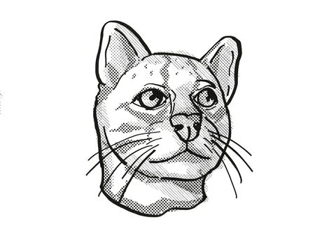 Retro cartoon style drawing of head of an Oncilla or northern tiger cat, an endangered wildlife species on isolated white background done in black and white.