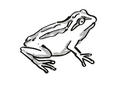 Retro cartoon style drawing of a Whistling Tree Frog , a native New Zealand wildlife on isolated white background done in black and white