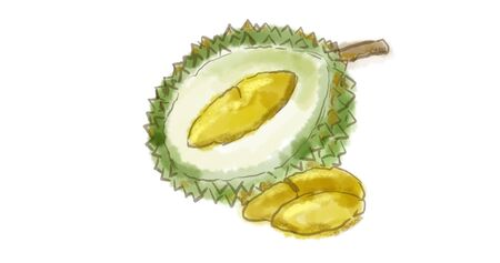 Watercolor drawing of a Durian fruit, named in some regions as the king of fruits on white.