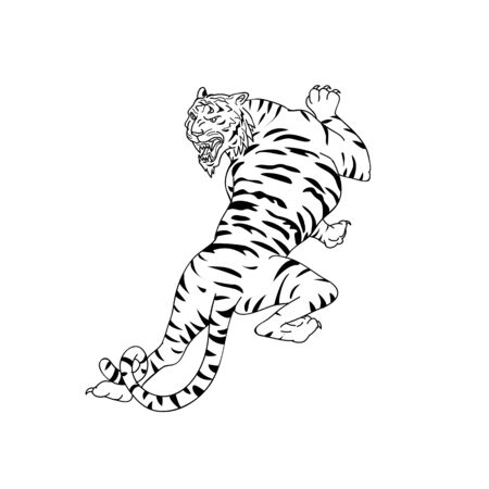 Drawing sketch style illustration of a Bengal tiger going up, stalking and looking down on isolated white background done in black and white.