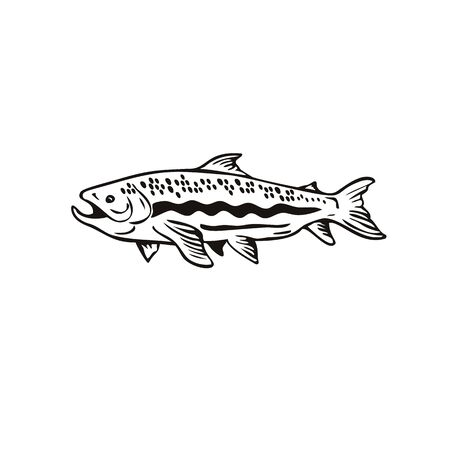 Retro woodcut style illustration of a Spotted Trout Fish viewed from right side on isolated background done in black and white.