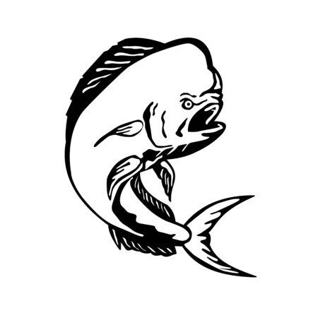 Black and White Etching engraving style illustration of an angry mahi-mah, dorado, common dolphinfish or dolphin fish viewed from the side jumping on isolated white background.