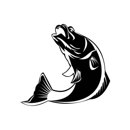 Black and White Illustration of a jumping largemouth bass, barramundi or Asian sea bass (Lates calcarifer) on isolated background done in retro style.