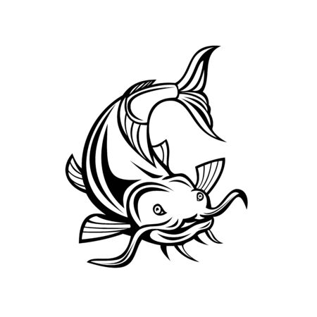 Illustration of a catfish, a ray-finned fish named for their prominent barbels, attacking or diving down about to attack viewed from front on isolated white background done in retro cartoon style.