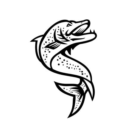 Black and White Mascot illustration of a Northern pike, Esox, Muskellunge, Tiger muskellunge or muskie fish viewed from high angle on isolated background in retro style.