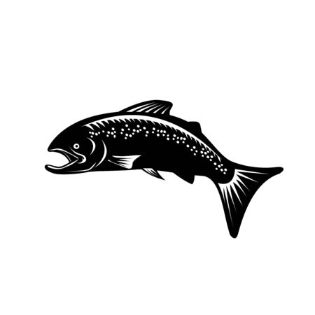 Retro woodcut style illustration of a Spotted or speckled trout Fish Jumping on isolated background done in black and white.