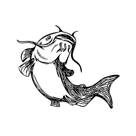 Black and White drawing sketch styleillustration of a ray-finned fish catfish also known as mud cat, polliwogs or chucklehead jumping up set on isolated background.