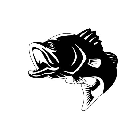 Illustration of a largemouth bass, black bass, barramundi or Asian sea bass (Lates calcarifer) jumping on isolated background viewed from the side done in retro Black and White style.