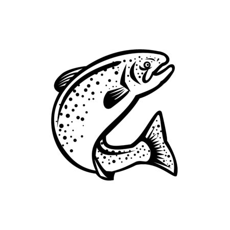 Illustration of a rainbow trout fish jumping up on isolated white background done in retro black and white style