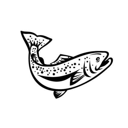 Retro style illustration of rainbow trout (Oncorhynchus mykiss), a species of salmonid native to cold-water tributaries of the Pacific Ocean jumping up on isolated black and white background.