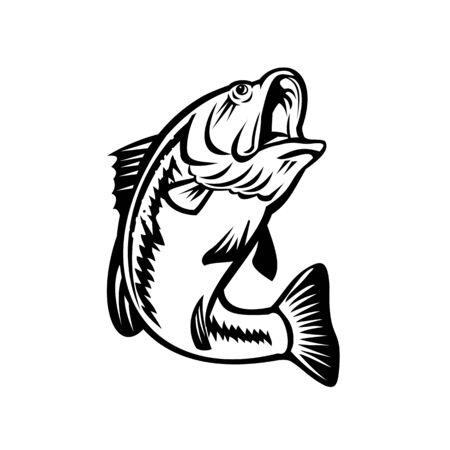 Illustration d'un achigan à grande bouche ou d'une espèce de bar noir et d'un poisson d'eau douce carnivore, nageant sur fond isolé fait dans un style rétro noir et blanc. Vecteurs