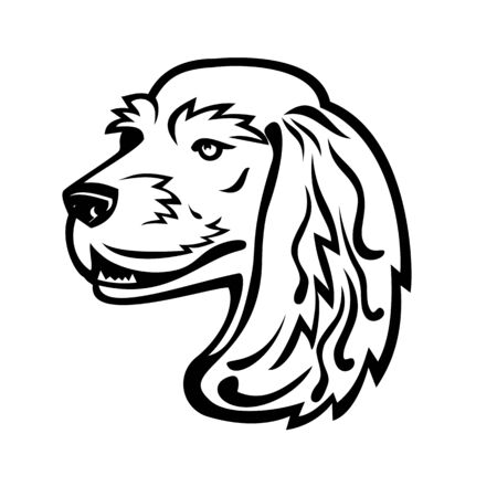 Black and white illustration of head of a English Cocker Spaniel, a breed of flushing dog looking to side viewed from  on isolated background in retro style. Illustration