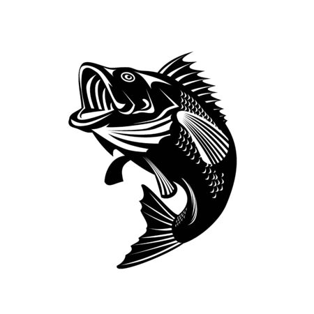 Illustration of a Florida largemouth bass, buckemouth or widemouth bass, species of black bass and a carnivorous freshwater gamefish, swimming up done in retro black and white style.