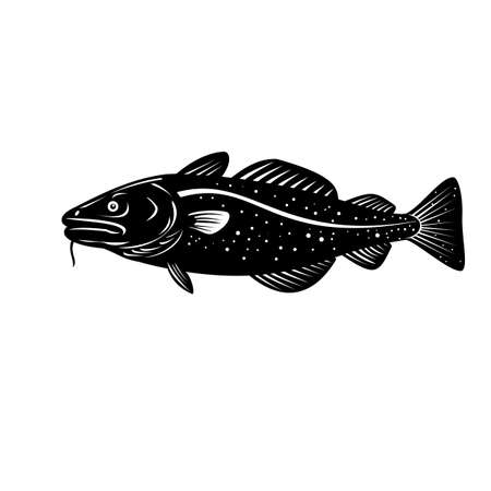 Woodcut style illustration of an Atlantic cod Gadus morhua, a benthopelagic fish of the family Gadidae commercially known as cod or codling viewed from side isolated background in black and white.