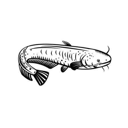 Retro woodcut style illustration of a Silurus biwaensis, the giant Lake Biwa catfish or Biwako-onamazu, a large predatory catfish endemic to Lake Biwa Japan on isolated background in black and white.