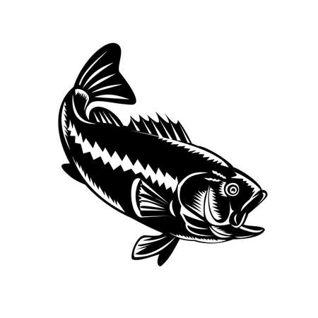 Illustration of a largemouth bass (Micropterus salmoides), species of black bass and a carnivorous freshwater gamefish, diving down done in retro woodcut black and white style. Vettoriali