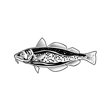 Retro style illustration of an Atlantic cod Gadus morhua, a benthopelagic fish of the family Gadidae commercially known as cod or codling viewed from side on isolated background in black and white. Vecteurs