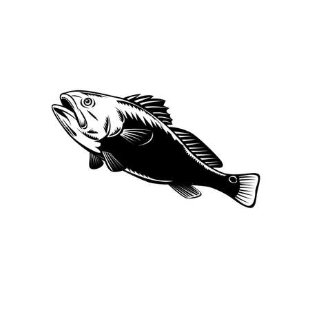 Red Drum Fish Stock Illustrations, Cliparts And Royalty Free Red Drum Fish  Vectors